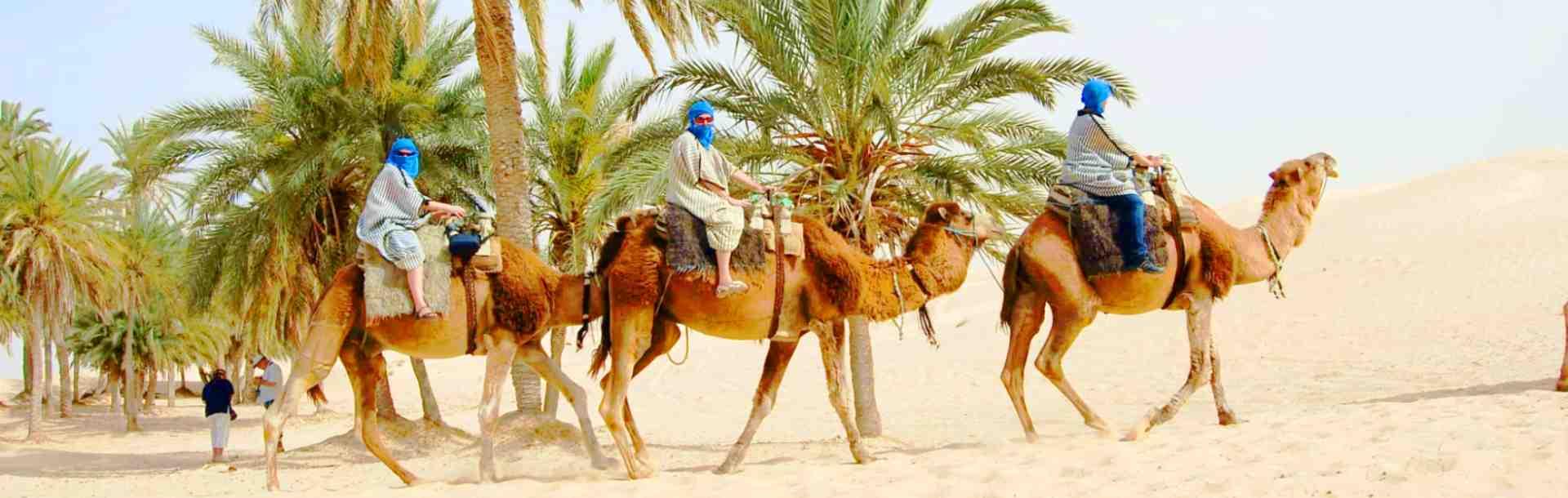 Монастир, Экскурсии на верблюдах